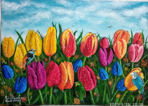 tulipanesygotas